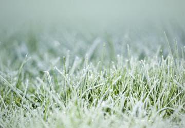зимовка газона