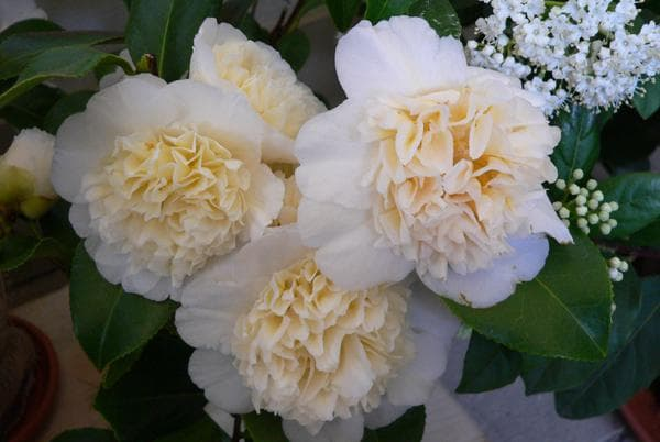 вид с белыми цветами