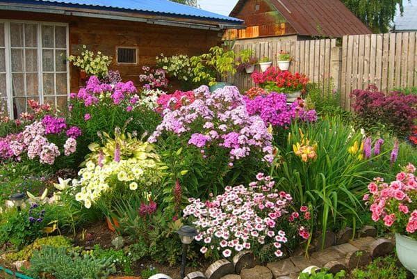 фото цветника перед домом