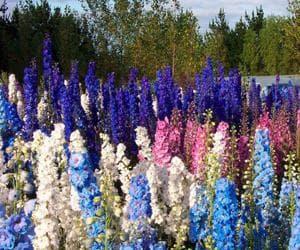 Посадка и уход за цветами