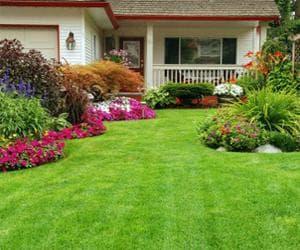 Идеальный дачный газон
