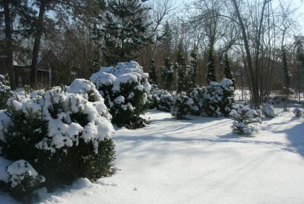 уход за растениями зимой