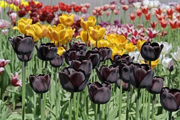 сажаем цветы весной