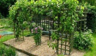 виноградная шпалера
