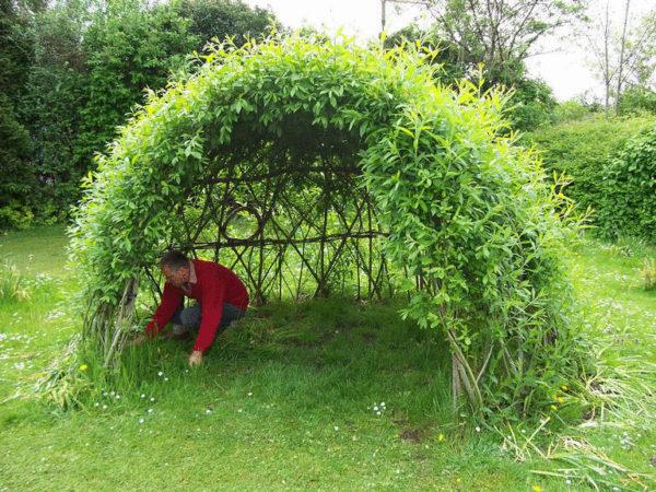 Как высадить живую изгородь из ивы и ухаживать за ней