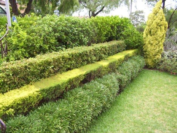Уход за живой изгородью
