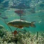 разведение рыбы на приусадебном участке