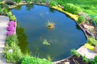 пруд на даче для разведения рыбы