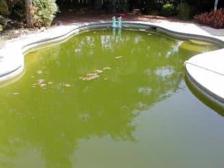 зеленеет вода в бассейне, решение очень простое