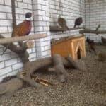 вольер для фазанов своими руками