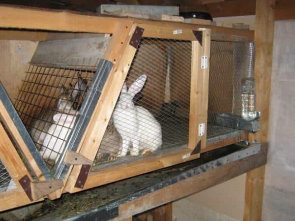 клетки для кроликов своими руами