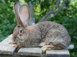 Кролики нужно содержать в клетках