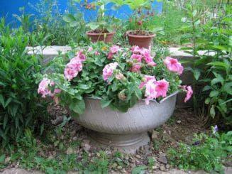 цветники, которые расположены в вазах или других различных емкостях.