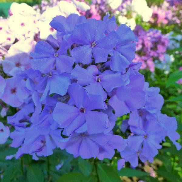 цветы Анны Калугиной