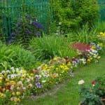 выращивание мальвы из семян в домашних условиях