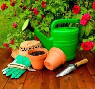 уход за розами в саду весной