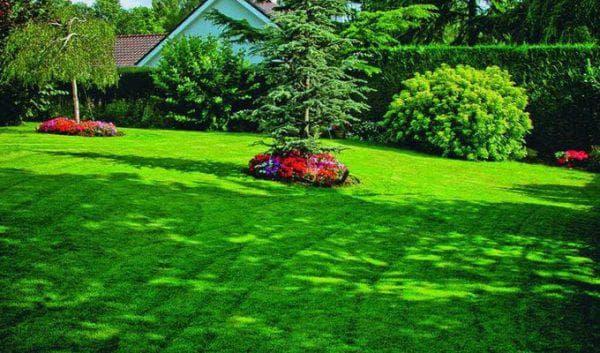 газон, расположенный в тени