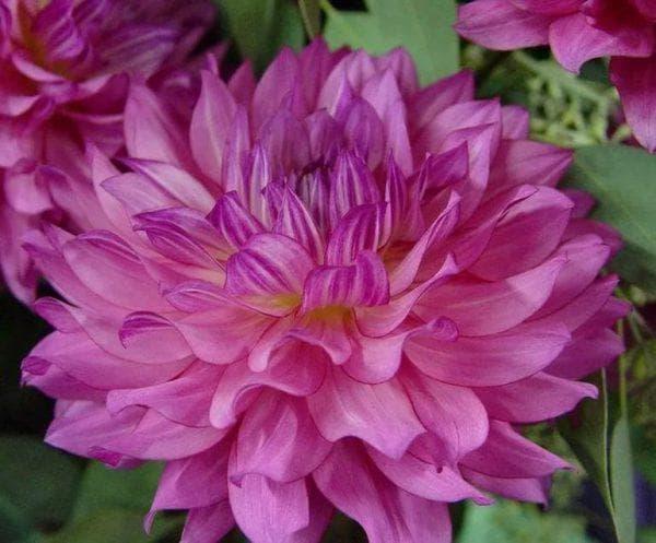 цветы Brushstrokes