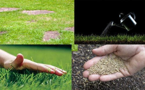 Когда и как сеять газонную траву весной