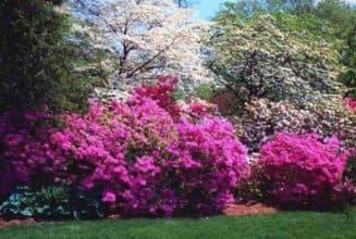 кустарники декоративные цветущие морозостойкие