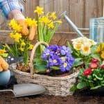 посадка и уход цветов Иберис