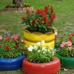 выращивание из семян цветов роза шток
