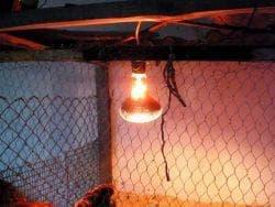 освещение в курятнике