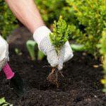 капуста декоративная посев семян на рассаду