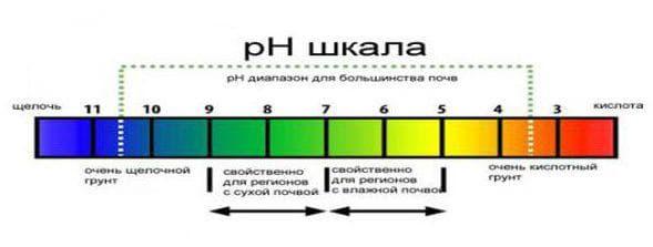 Лакмус для определения кислотности почвы
