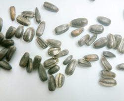 семена декоративного подсолнуха