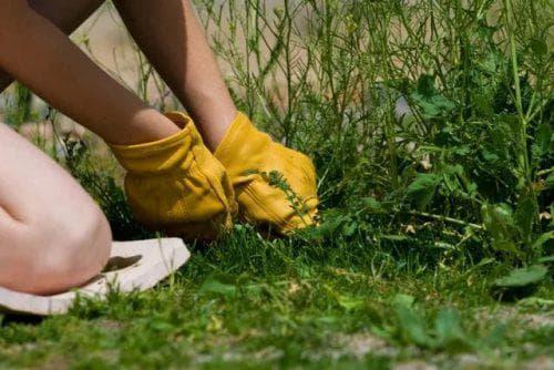 Мох на садовом участке: как избавиться от него?