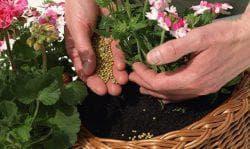 подкормка цветов