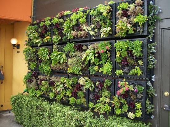 декоративная капуста вертикальное озеленение