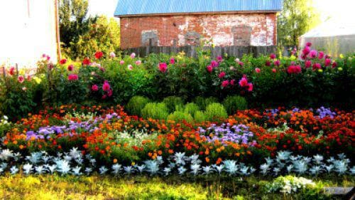 Какие растения посадить на дачном участке