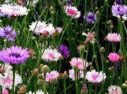 как ухаживать за цветами в саду