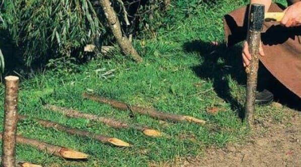 колышки для живой изгороди
