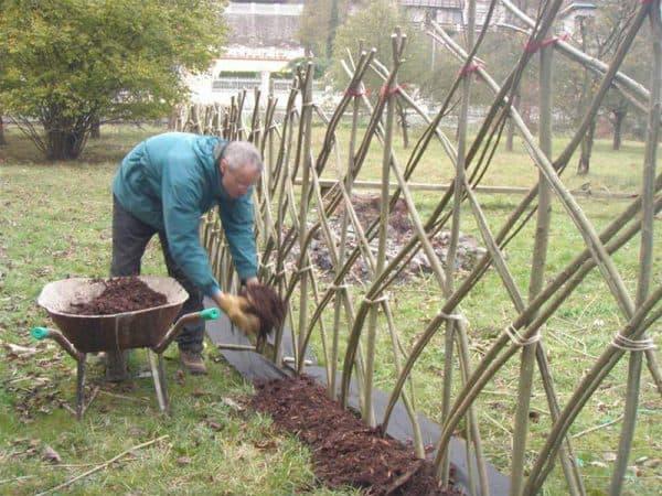 компост для живой изгороди