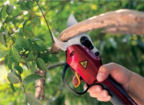лезвия секатора для обрезки высоких деревьев