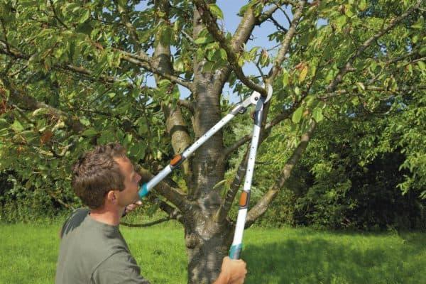 секатор для обрезки высоких деревьев с двумя рычагами