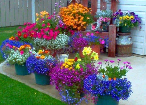 оформление цветами на маленьком участке