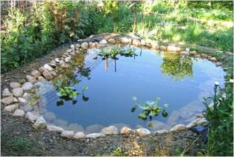 как очистить водоем