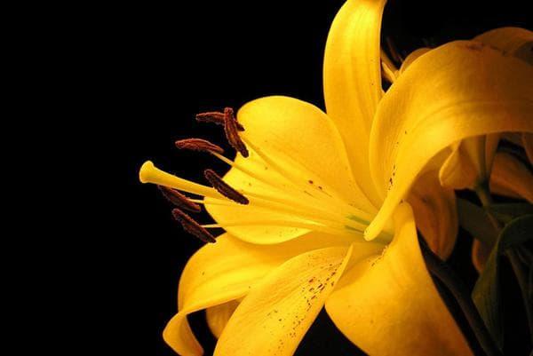 Фото посадки цветов