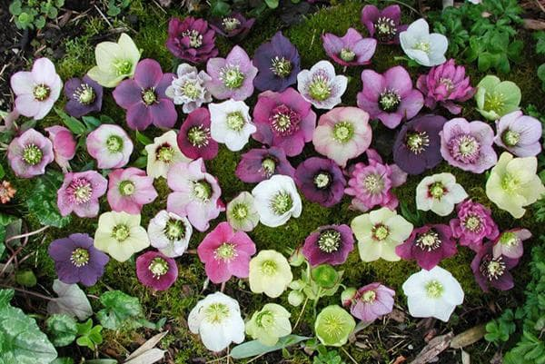 фото ухоженных цветов