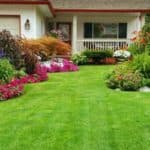 Как правильно сделать газон на даче своими руками