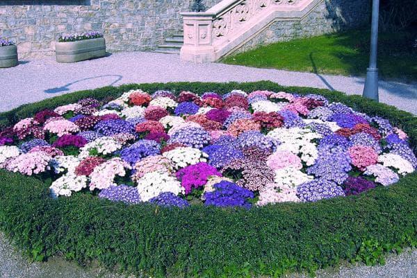 фото растений на клумбе