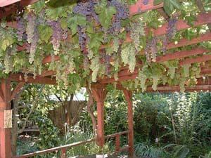 виды виноградных опор