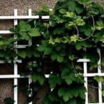 как называется решетка для вьющихся растений