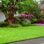Как и когда лучше сажать газонную траву: технология правильного посева осенью и весной