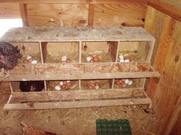 как правильно оборудовать гнезда