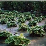 Укрывные материалы для грядок – помощники садовода и огородника